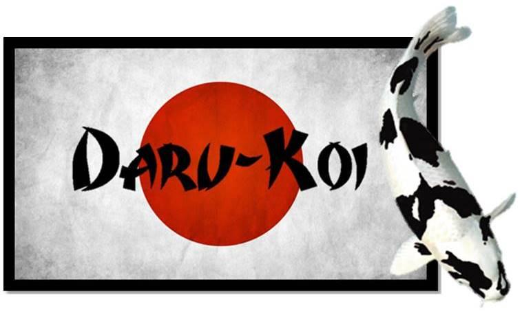 Daru-Koi