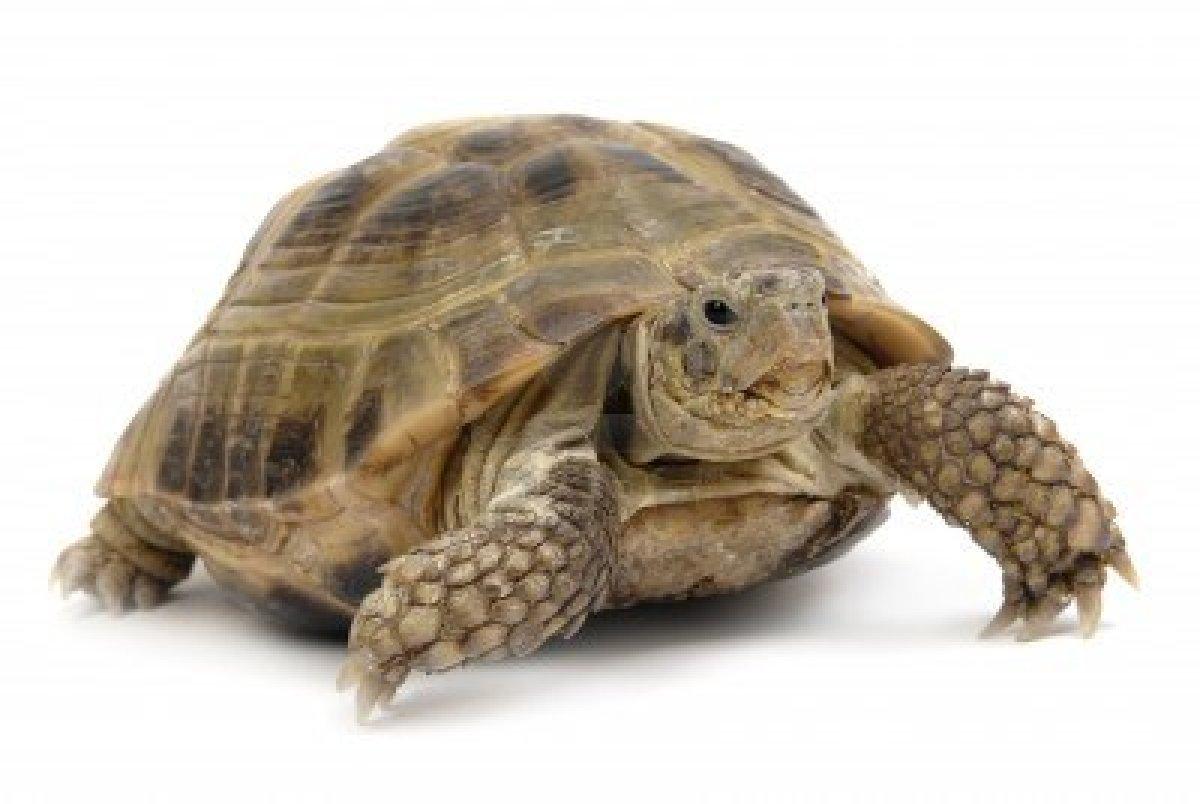 Sera Schildpaddenvoer