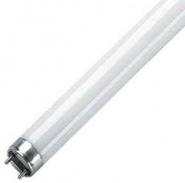 Losse TL vervanglampen